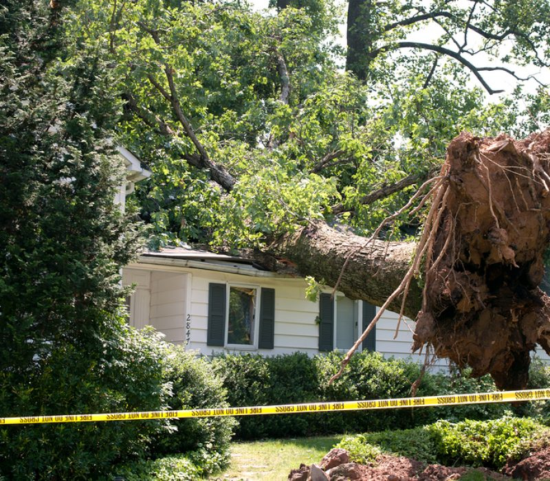 bigstock Uprooted Tree 68388109